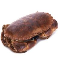 春播活水产活面包蟹600-800g