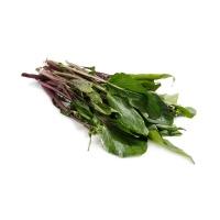 春播联盟农庄有机栽培红菜苔400g