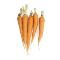 春播农庄有机栽培拇指萝卜500g
