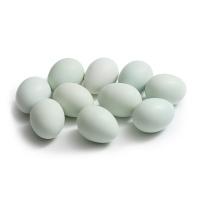 净田社散养黑羽乌鸡绿壳蛋10枚
