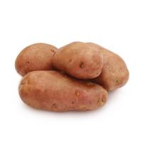 任笃之种植甘肃红皮土豆1000g