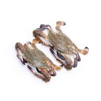 春播冰鲜水产东海野生梭子蟹2只装