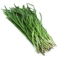 春播联盟农庄韭菜400g
