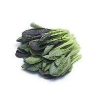 春播联盟农庄有机栽培紫油菜250g
