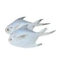春播冰鲜水产鲳鱼(150-190g\只)2只装