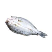 冷冻三去白蕉海鲈鱼480g(非真空)