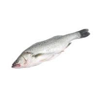 春播冰鲜水产三去海鲈鱼500-600g
