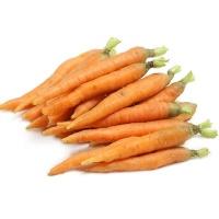 春播联盟农庄有机栽培拇指萝卜500g