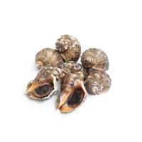 春播活水产小海螺 1盒装 450-500g