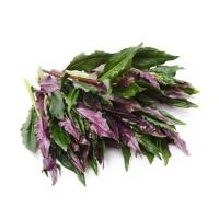 春播安心直采紫背天葵200g