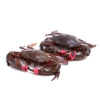 春播活水产赤甲红螃蟹 400-500g (3-4只)