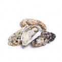 产地直采乳山牡蛎4号2000g(约10-14只)
