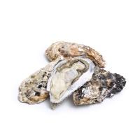 产地直采乳山牡蛎4号2000g(约9-11只)