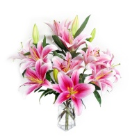 B级粉色百合12朵花苞