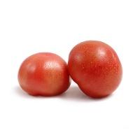春播直采普罗旺斯番茄约4.5斤