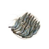 东山岛海捕活冻黑虎虾250g(11-15只)×2