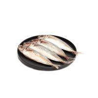 东山岛海钓活冻巴浪鱼500g(3-5条)×2