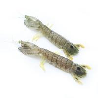 春播活水产富贵虾(母)2只装 450-550g