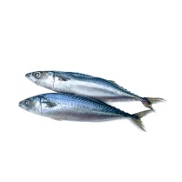 东海捕捞鲭鱼470g×4(220-250g/条)