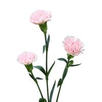 花楹樱花粉康乃馨20枝