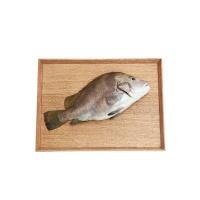 春播冰鲜水产包公鱼 650-750g