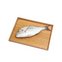 春播冰鲜水产金头鲷鱼 650-750g